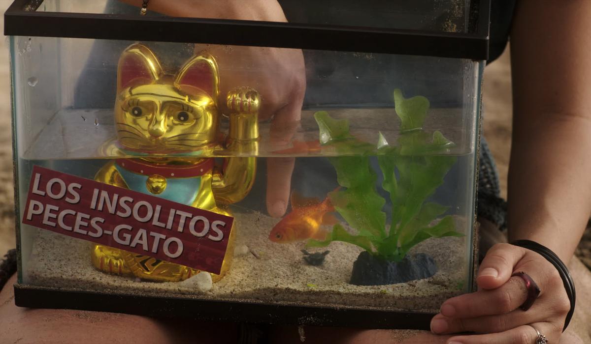 Los insolitos peces gato_1